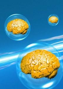 A0MRJY brains Gehirne